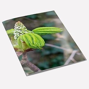 view Tree Buds A6 Notebook details