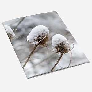 Snow Teasel Notebook
