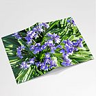Bluebells Notebook