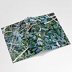 Frosty Leaves Notebook
