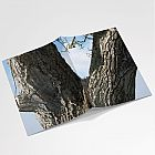 Walnut Tree A6 Notebook