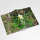 Wild Primrose A6 Notebook